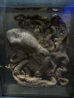 Every museum should have a pickled octopus in a glass jar