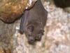 Bat 4!