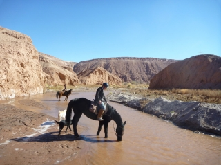 Stopping for a drink before crossing the San Pedro. We were joined on the four hour ramble by three energetic hounds